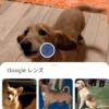 超絶進化中のGoogleレンズがすごい。Pixel3以外android、iPhoneでも使える画像解析ア