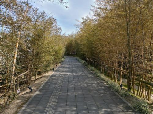 一蘭の森へ続く道